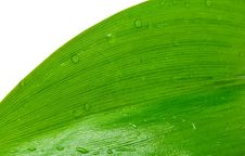 Free Green Leaf With Drops Of Dew Royalty Free Stock Photography - 14467677