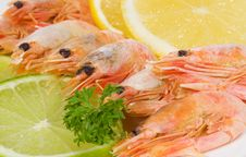 Free Shrimps Stock Photos - 14467683