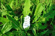 Free Light Bulbs In The Grass Stock Image - 14468121