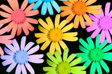 Free Multicolor Camomiles Stock Images - 14469554
