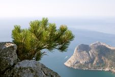 Free Pine Over Crimea Coast Royalty Free Stock Photo - 14469735