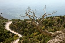 Free Dead Tree Near To Coast Royalty Free Stock Photo - 14469865