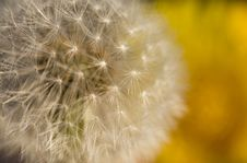 Free Dandelion Seed Background Stock Photo - 14469970