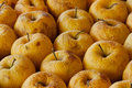 Free Rotten Apples Stock Image - 14472981