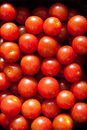 Free Baby Tomatoes Stock Photography - 14473632