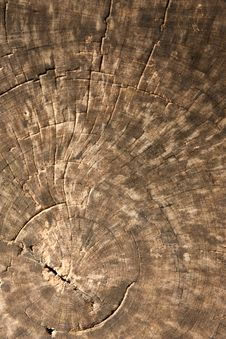 Texture Of Old Teak Wood Stock Photography