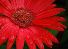 Free Flower With Water Droplets Stock Image - 14471871