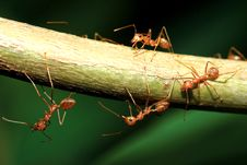 Free Ant And Leaf Stock Photography - 14472042