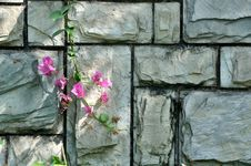 Free Stone Wall Under Shadow And Pink Flower Royalty Free Stock Images - 14472159