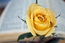 Free Yellow Rose And Bible Royalty Free Stock Photos - 14472718