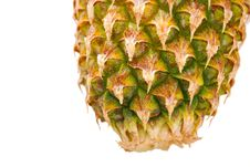 Free End Of Pineapple Isolated On White Royalty Free Stock Photos - 14472948