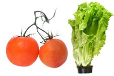 Free Two Tomatoes And Lettuce In A Pot Royalty Free Stock Photos - 14473968