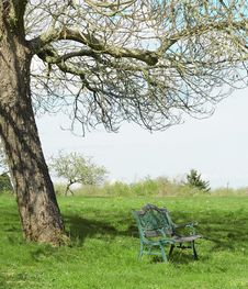 Free Bench Under Tree Royalty Free Stock Photos - 14474138