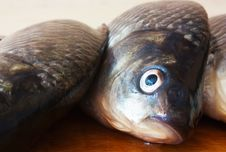 Free Fresh River Fish Royalty Free Stock Image - 14475156