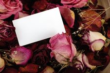 Card With Dried Roses Royalty Free Stock Photography