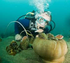 Scuba Diver Looking At Enemone Fish Stock Image