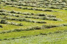 Free Lawn Stock Photo - 14478560