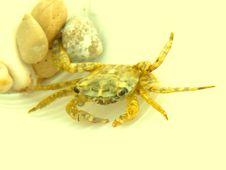 Free Crawfish Royalty Free Stock Photography - 14479967