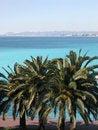 Free Palms On Promenade, Nice Stock Photos - 14489413