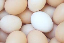 Free Eggs Background Royalty Free Stock Image - 14480276