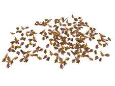 Oak Tree Leaves Stock Image