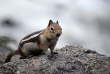 Free Chipmunk Squirrel Stock Photo - 14481060