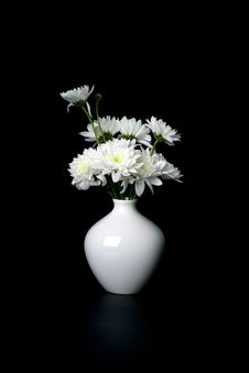 Free White Golden-daisy On White  Vase On Black Stock Images - 14481274