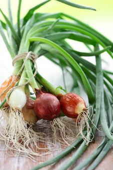 Free Green Onion Stock Image - 14481491