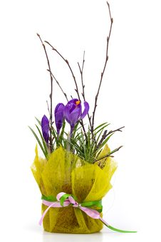 Free Bouquet Of Spring Crocuses Royalty Free Stock Image - 14481936