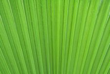 Free Palm Leaf Royalty Free Stock Image - 14482096