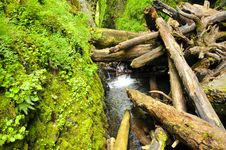 Log Pileup In Oneonta Gorge Royalty Free Stock Images