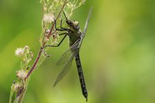 Free Dragonfly Royalty Free Stock Photos - 14482638