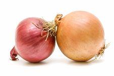 Free Variety Of Onions Stock Photos - 14484893