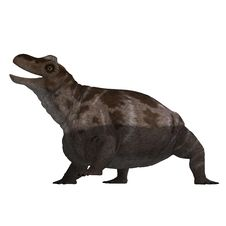 Free Dinosaur Keratocephalus. 3D Rendering With Royalty Free Stock Images - 14485079