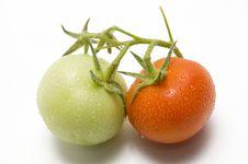 Free Fresh Tomato Stock Photos - 14486233