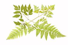 Free Herbarium. Royalty Free Stock Photography - 14487157