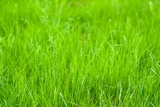 Free Fresh Sprouts Of Grass Stock Image - 14487511