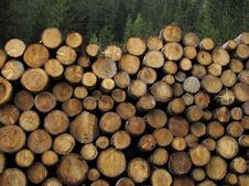 Free Stacked Logs Stock Image - 14487741