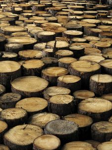 Free Stacked Logs Royalty Free Stock Image - 14487866