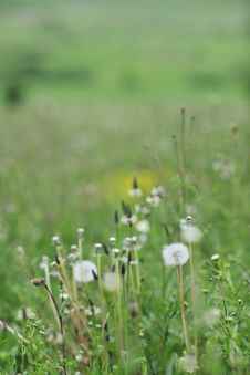 Free Green Grass Stock Photography - 14488112