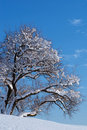 Free Winter Tree Royalty Free Stock Images - 14492879