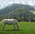 Free Horses Stock Photo - 14493360
