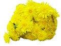Free Bouquet Of Field Dandelion Flowers Stock Photo - 14493550