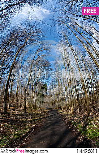 Free Path Thru Wood And Spring Tree Crowns Stock Image - 14495811