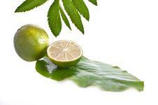 Free Lime Stock Photos - 14490523