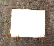 Plum Texture Royalty Free Stock Photo
