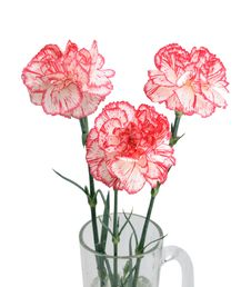 Bouquet Of Three Carnations Stock Images