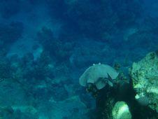 Free Marine Life 8 Stock Images - 14491214