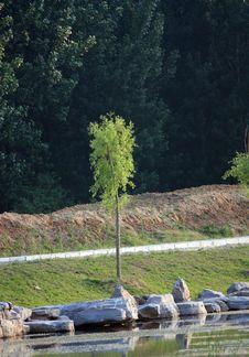 Free Willow Tree Stock Photos - 14491503