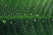 Free Green Leaf With Rain Drops Royalty Free Stock Photos - 14491558